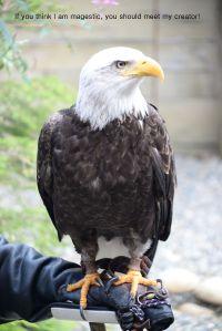 eagle creator